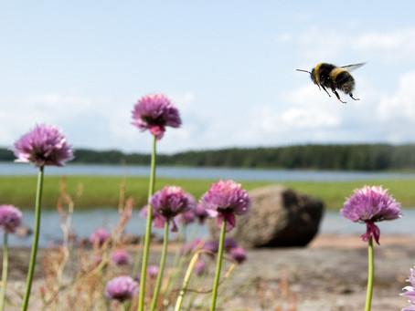 Lapsuuden hyönteiskesät Virolahdella