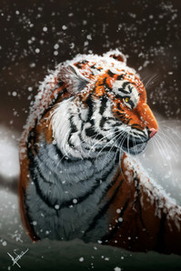 mariah-weinschutz-tiger-done (1).jpg