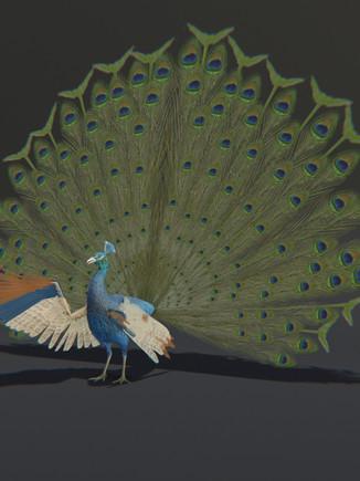 Birds Project