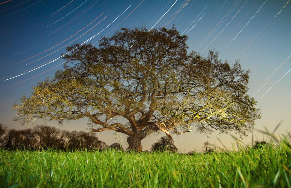 Tree Startrial
