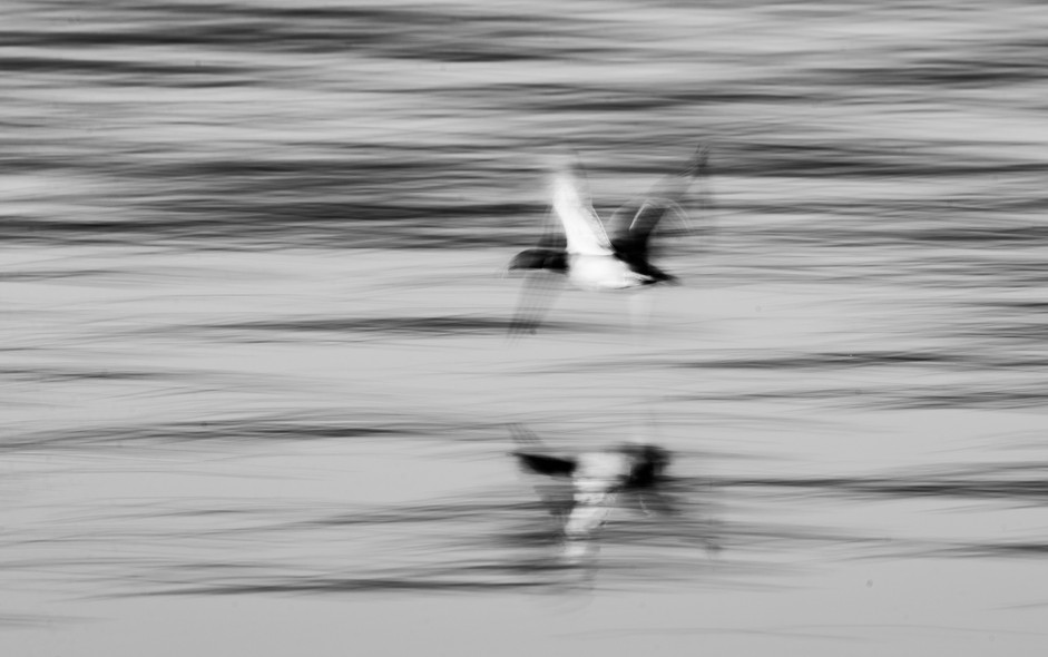 Abstract Duck
