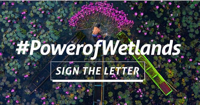 power of wetlands.png