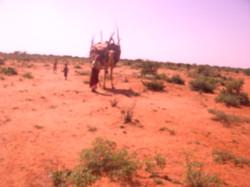 Life in Somaliland