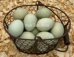 April 2020 Eggs