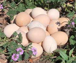 Peaches & Cream Swedish Flower Eggs