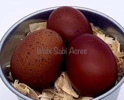 Trio of BCM Eggs