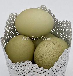 Silverudd's Blue Eggs