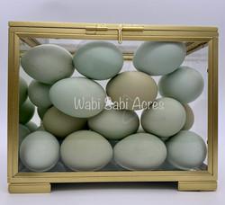 Glass-boxed Aquamarines