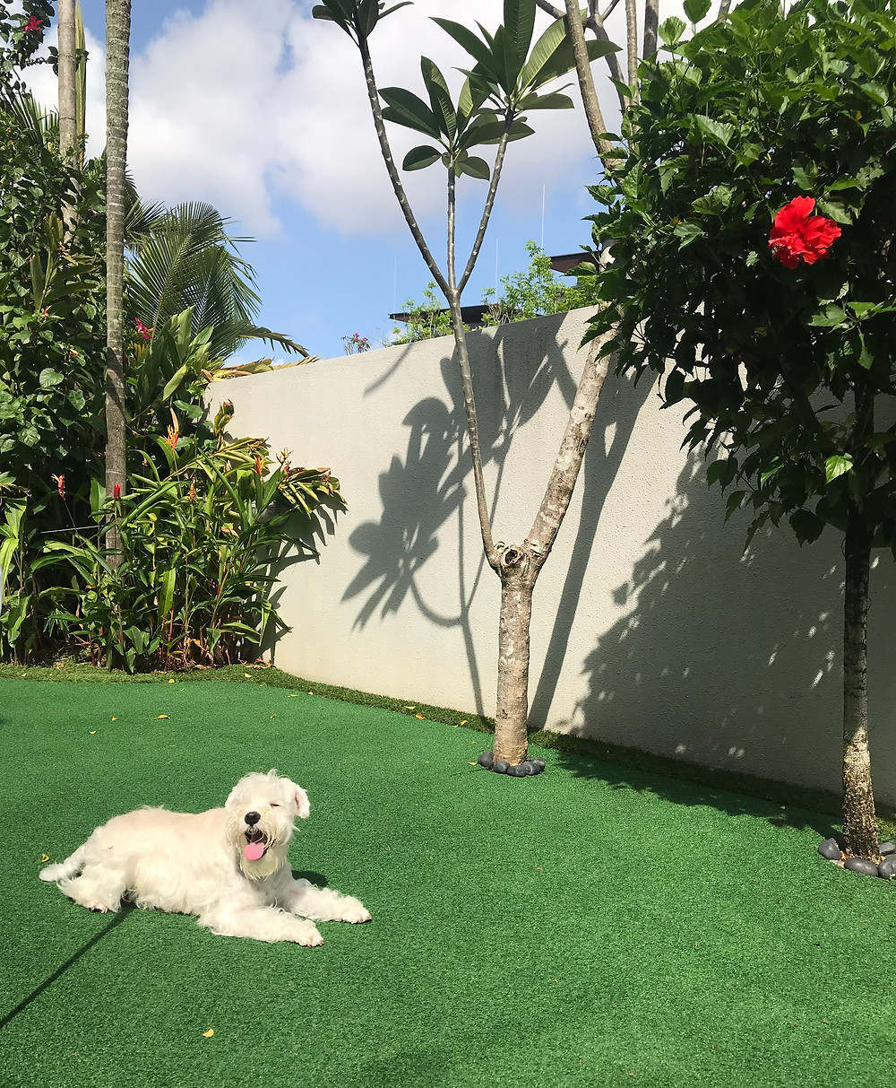 a pet dog relaxing in the garden of a landed property