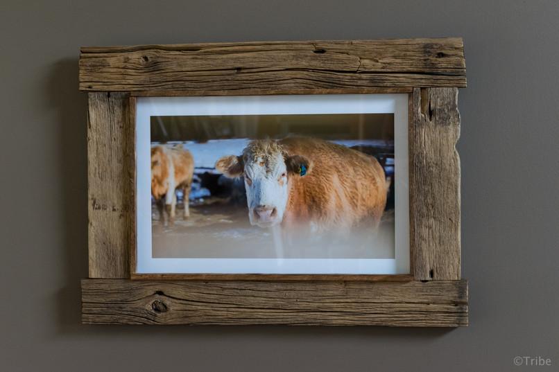 cows-farm-rustic-works