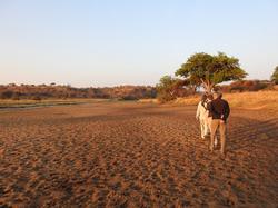 © Tarangire Safari Lodge