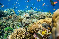 coral-manta-resort