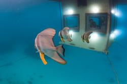 Underwater_131007-140337-5531