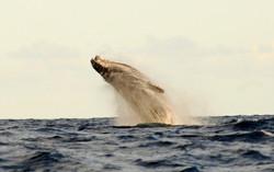 5 Activities - Whalewatching 1