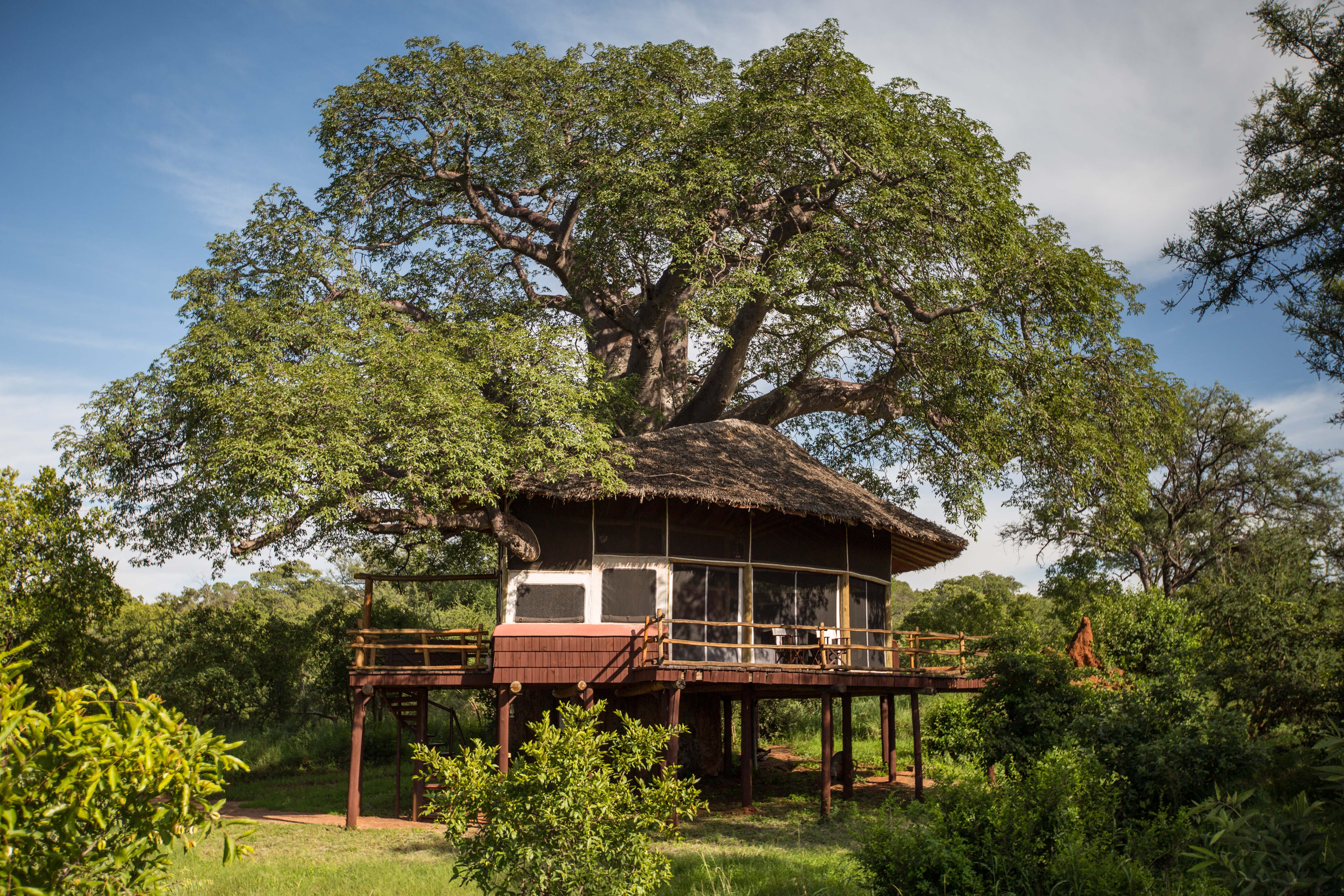 Tarangire Tree Tops © Silverless