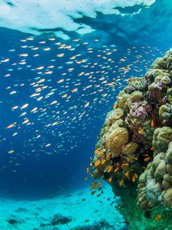 diving-manta-resort