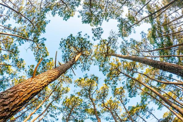 DREAM HIGH - Forêt d'Olonne