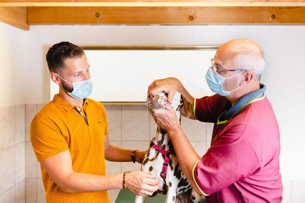 Consultation veterinaire