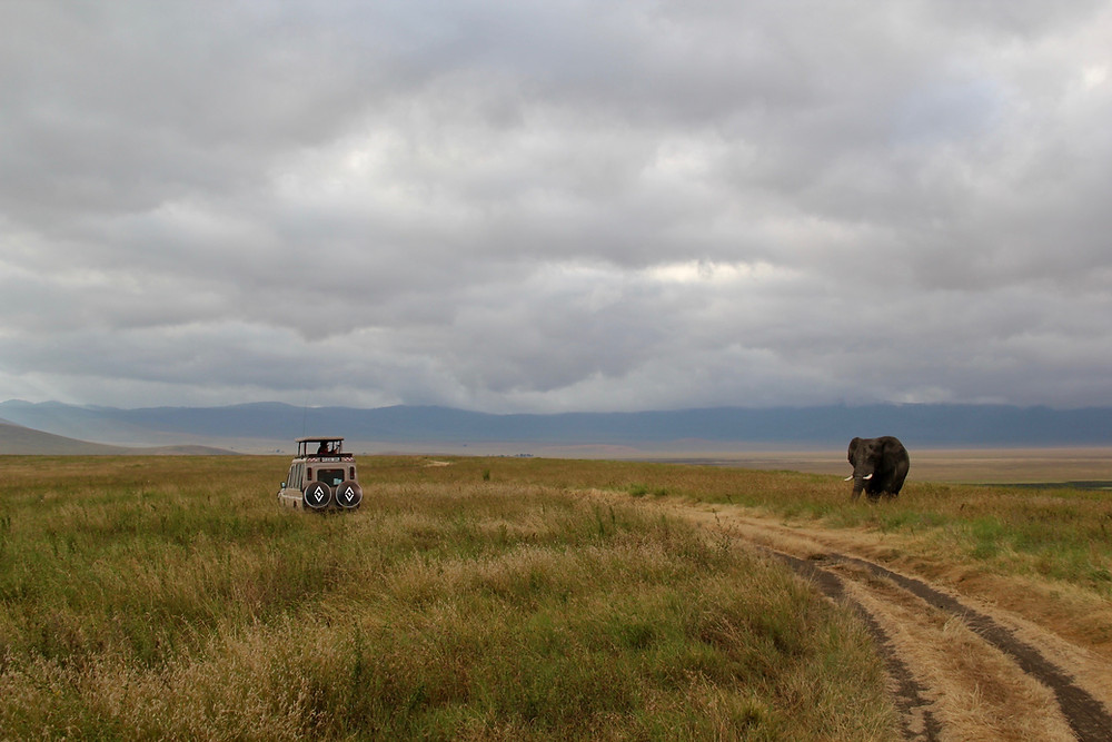 Elephants Murchison Falls Safari