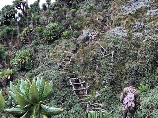 Sabhinyho hike
