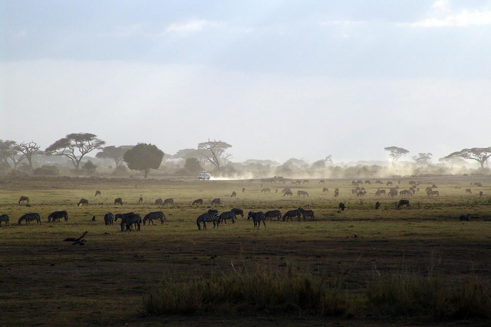 Hyaena Serengeti National Park Safari