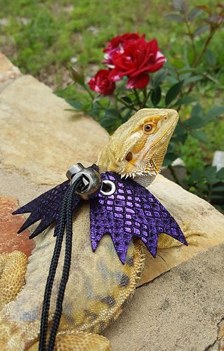 Leather Lizard Harnesses and Leashes