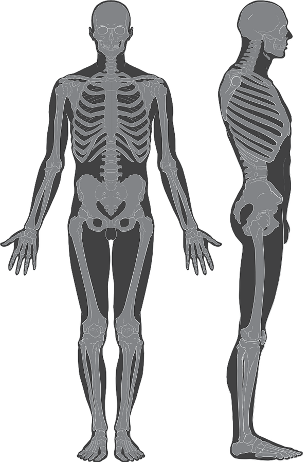 682px-Skeleton_whole_body.svg.png