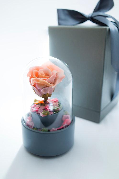 朱古力玫瑰花音樂盒   Chocolate Rose Music Box