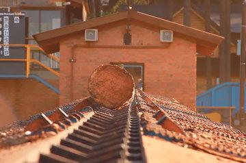 troncos victoria maderas laharrague chodorge lider macimbre