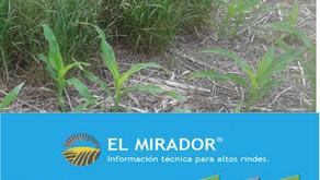 Boletín Técnico El Mirador N12