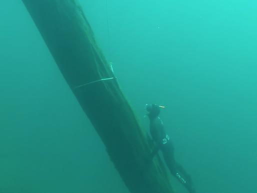 """""""Bosque Hundido"""" la iniciativa que rescata troncos desde el fondo de los lagos del sur"""