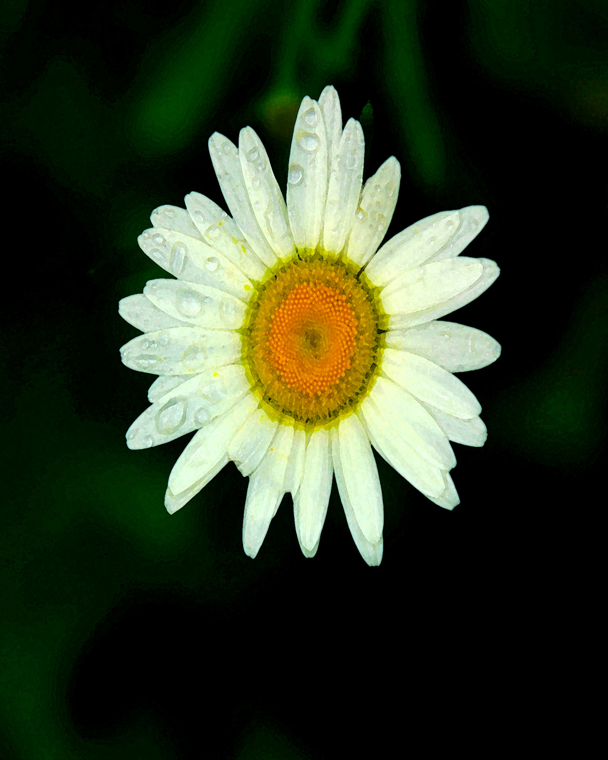 Tearful Daisy