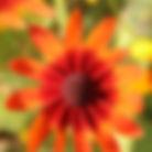 Black eye 6x6.jpg