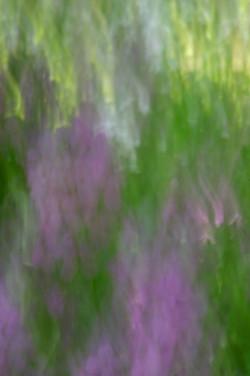 Watercolor Lupin