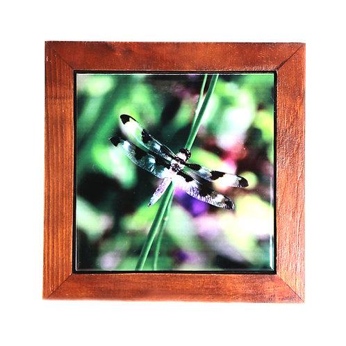Framed 6x6 Tile