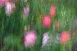 Pastel Flowers.JPG