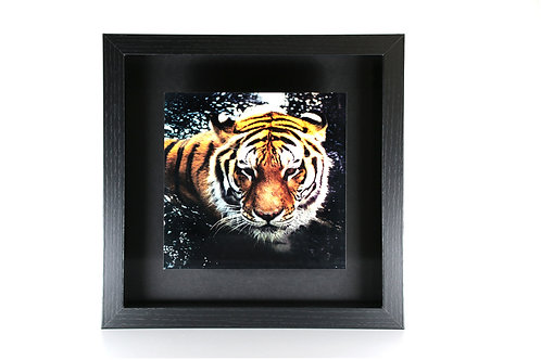 Shadow Box - Black Frame - 9x9