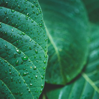 Quelle plante adopter lorsque vous n'avez pas la main verte ? 🤨