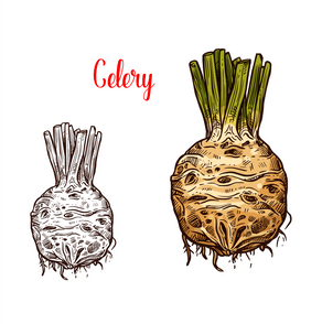 The Celery Root, ugly, tasty and powerful