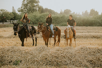 3 בני נוער על גבי סוסים בשדה קש