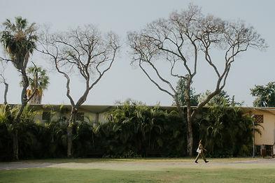 תמונה של שני עצים גבוהים בכפר הנוער בן שמן