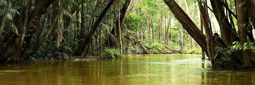 iStock_482799971_Brazil_Amazon_Rainfores