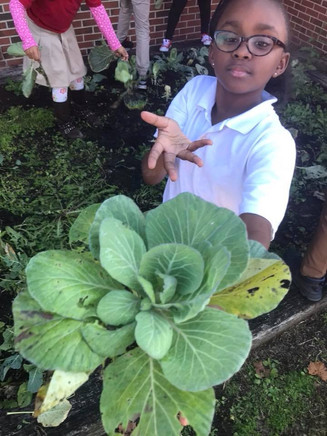 4-H Gardening Project