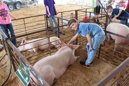 4-H Pig Squeal