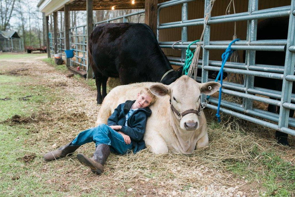 4-H Beef Project
