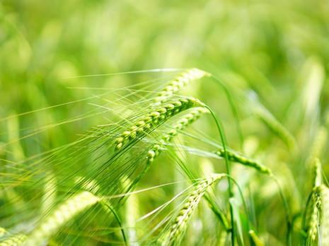 Účinky a působení potravin