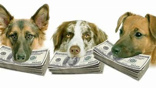 dog and money.jpg
