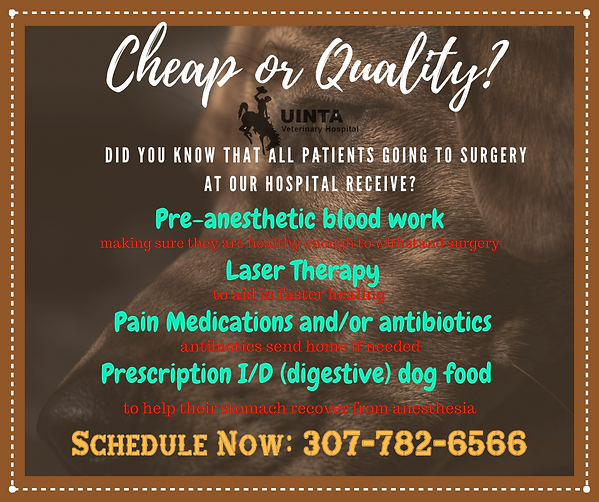 Why Uinta veterinary hospital for your a