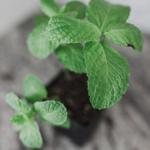 The Many Health Benefits Of Peppermint