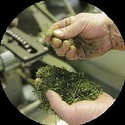 角田製茶のお茶が美味しい理由
